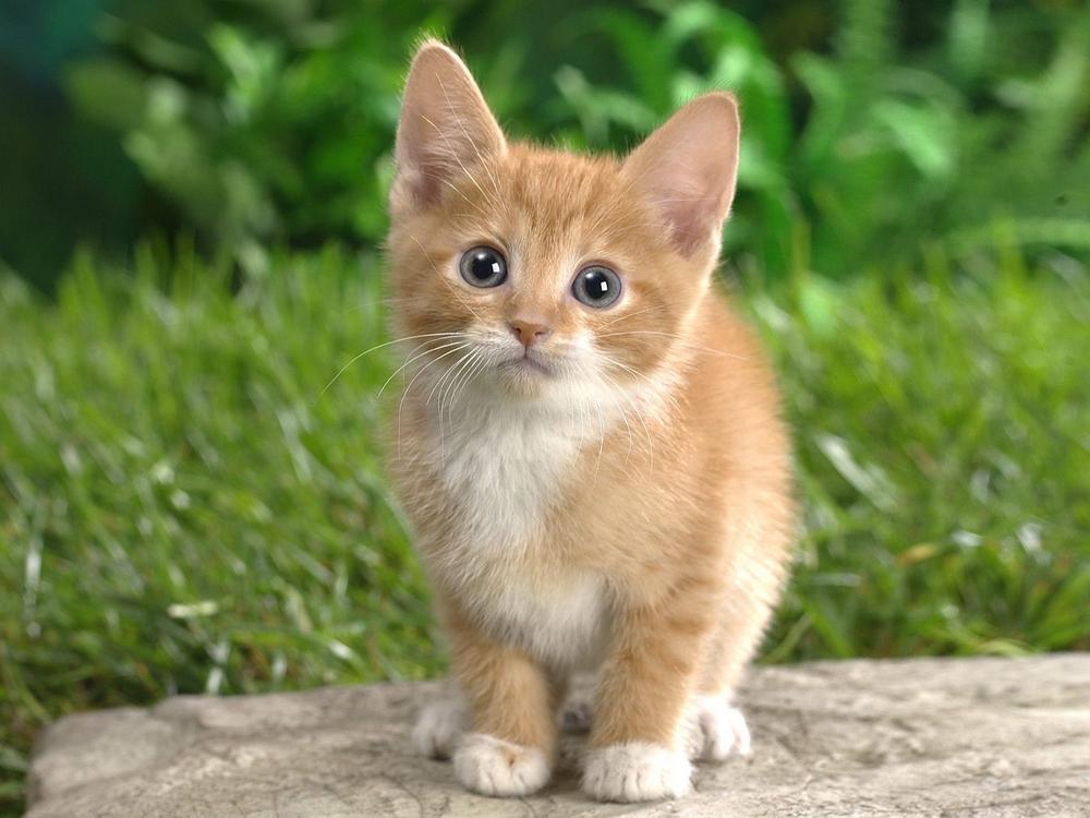 Amo Il Mio Gattonomi Di Gatto Maschio Che Iniziano Per H Amo Il