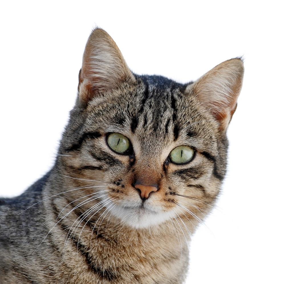 Amo Il Mio Gattonomi Di Gatto Maschio Che Iniziano Per J Amo Il