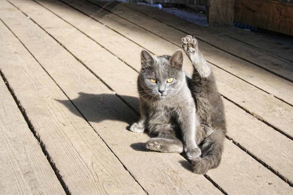 Amo Il Mio Gattonomi Di Gatto Maschio Che Iniziano Per Z Amo Il